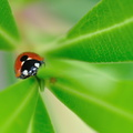 Coccinelle||<img src=_data/i/upload/2011/06/05/20110605205353-19825acc-th.jpg>